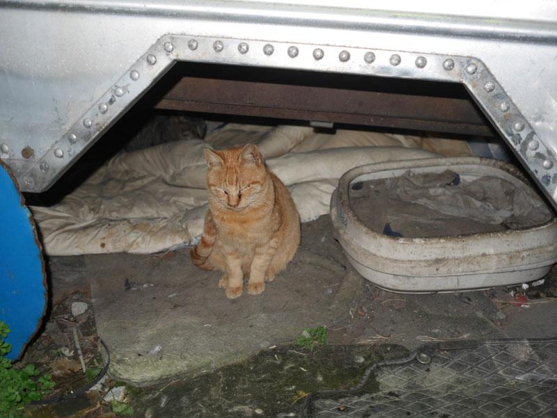 写真は会社の猫。随分と俺は餌をやっていない。この一番慣れたヤツでも何かよそよそしい。やはり与える物を与えないと、猫だって遊んでくれないのである。