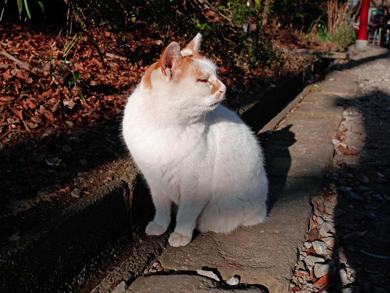 今度生まれ変わったら、お金持ちの家の猫にでもなりたいな。